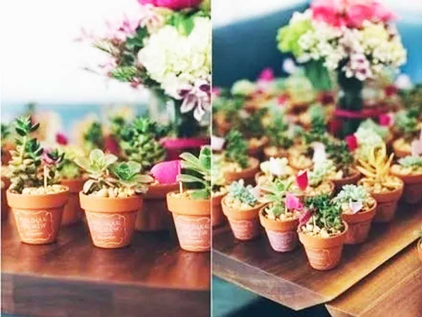 Mini vasinhos de suculentas para lembrancinhas de casamento ,Mini vasinhos de suculentas para lembrancinhas de noivado , Mini vasinhos de suculentas para lembrancinhas de aniversario , Mini vasinhos de suculentas para lembrancinhas de chá de cozinha